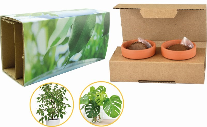 Clean Air Duo, Ficus benjamina, Philodendron selloum, 1-4 c Digitaldruck inklusive
