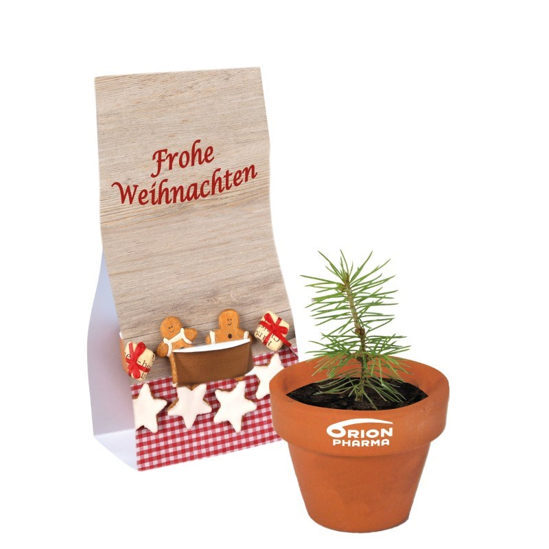 Mini-Terrakottatopf mit Fichtensamen